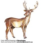 How to Draw a Barasingha