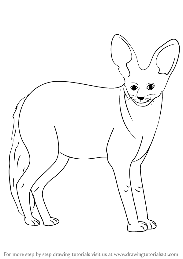Learn How To Draw A Bat Eared Fox Wild Animals Step By