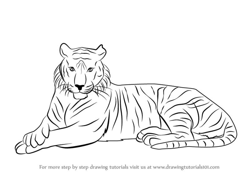 Tiger Line Drawing Easy : Simple tiger drawing for kids