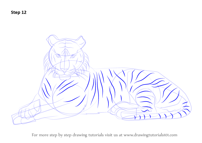 learn how to draw a bengal tiger wild animals step by