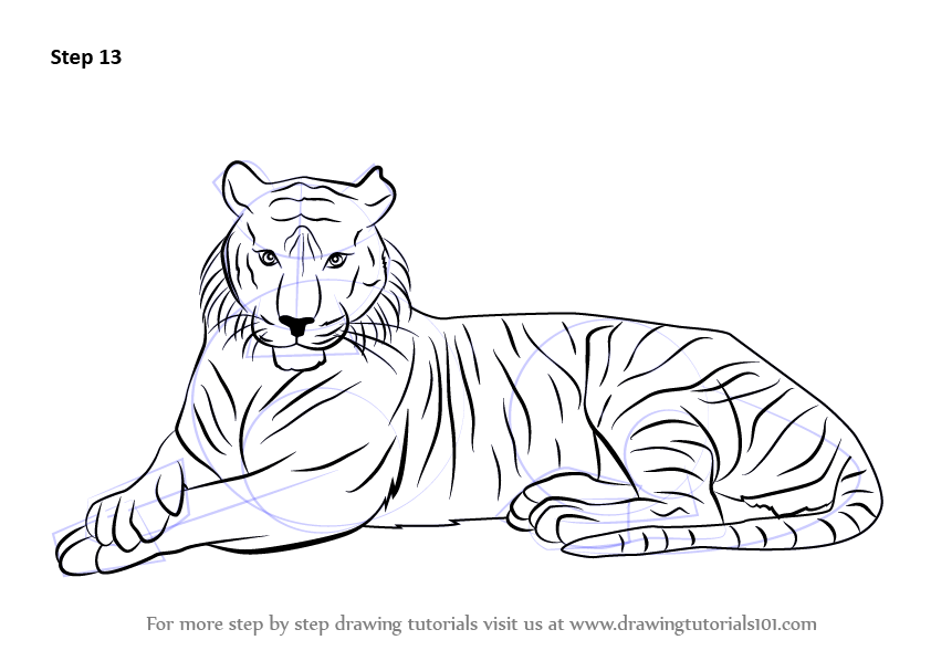 Learn how to draw a bengal tiger wild animals step by step drawing tutorials