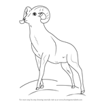 How to Draw a Bighorn sheep