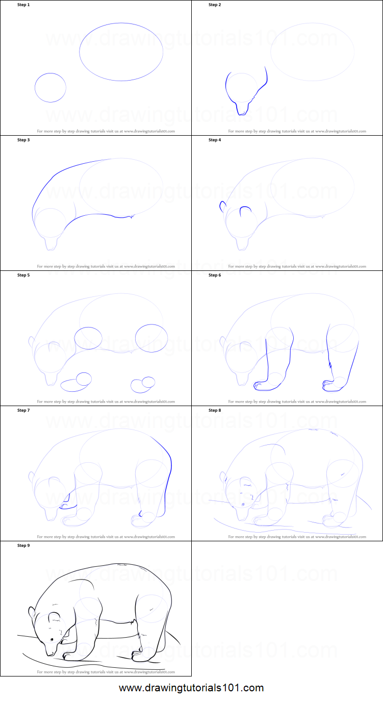 how to draw a black bear printable step by step drawing sheet