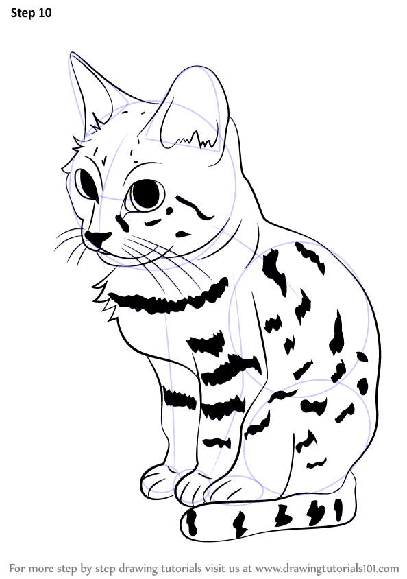 Learn How To Draw A Black Footed Cat Wild Animals Step