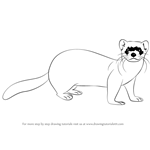 How to Draw a Black-Footed Ferret
