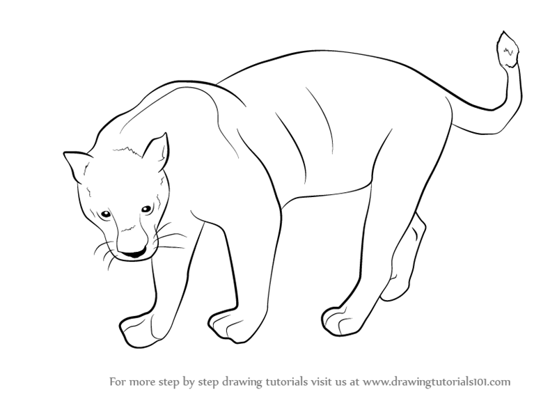 learn how to draw a black panther wild animals step by step drawing tutorials