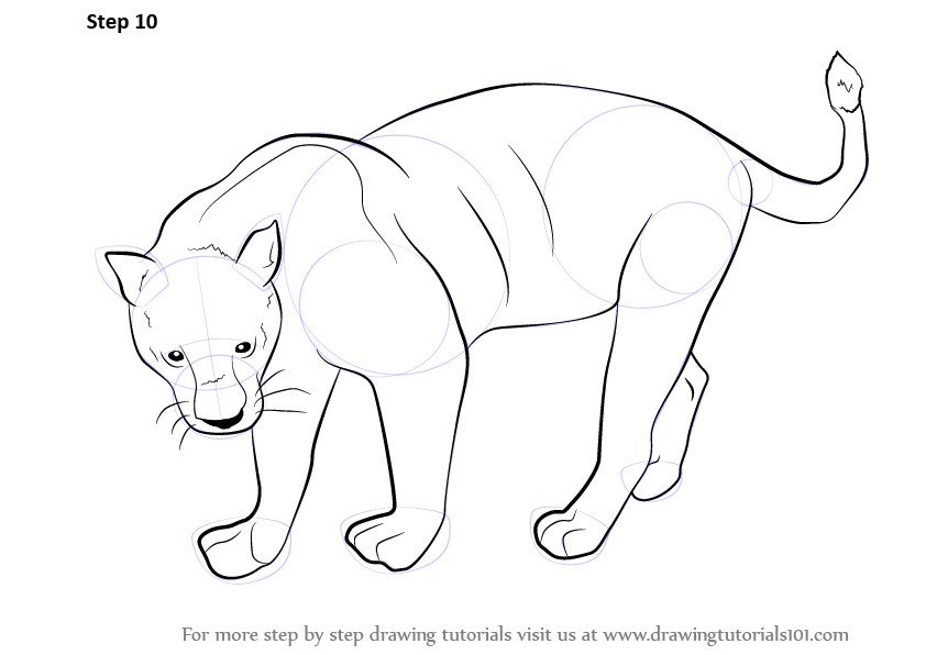 How To Draw A Florida Panther For Kids