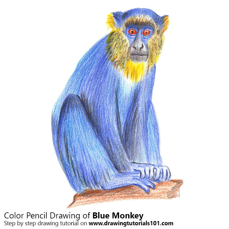 Blue Monkey Color Pencil Drawing