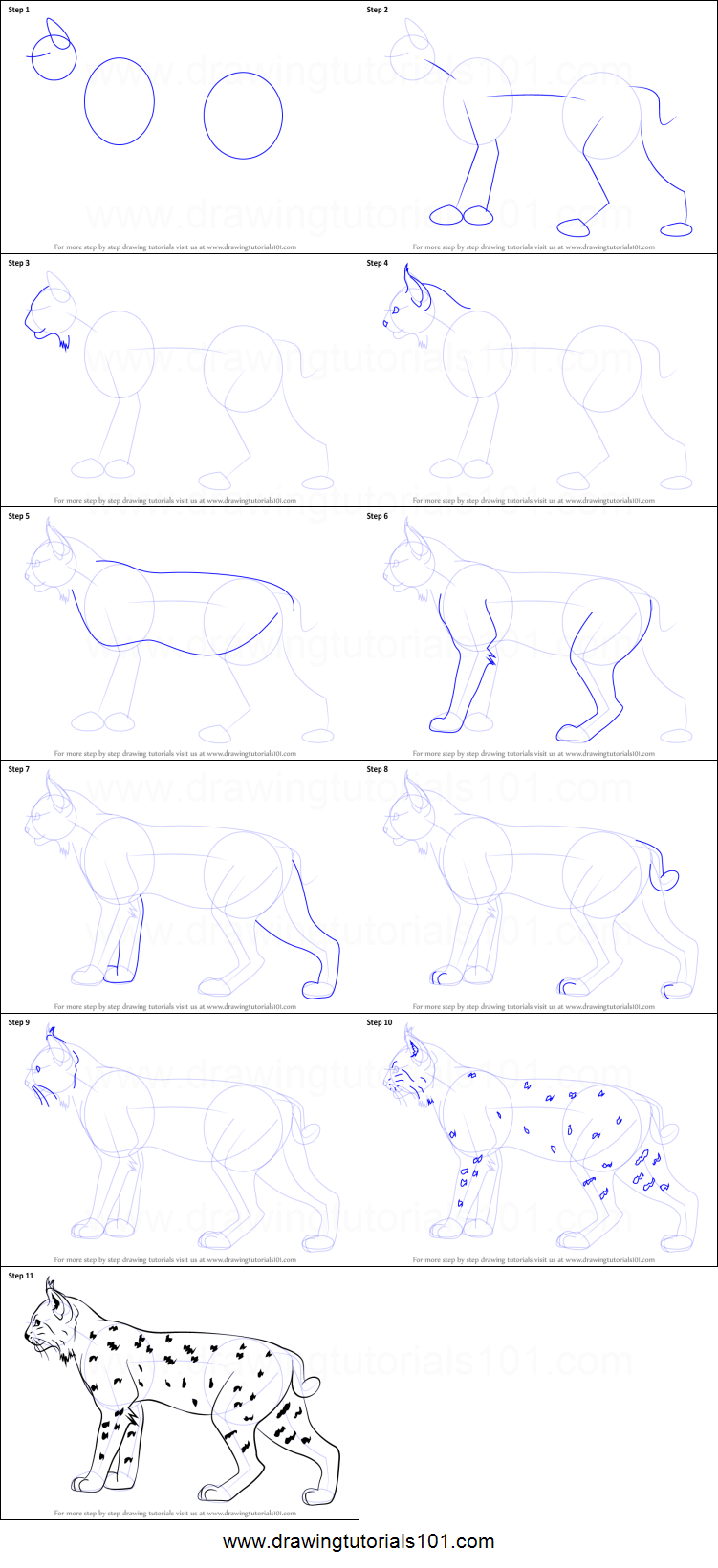 How To Draw A Bobcat €�