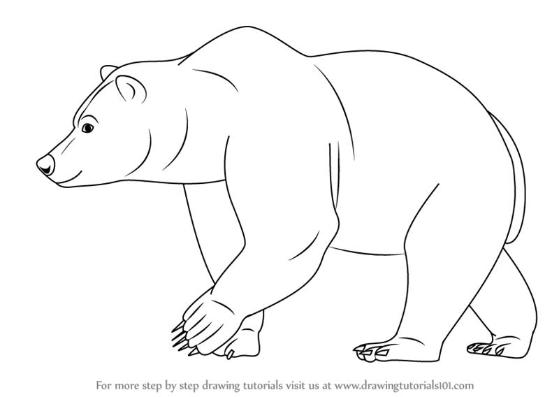 step by step how to draw a brown bear
