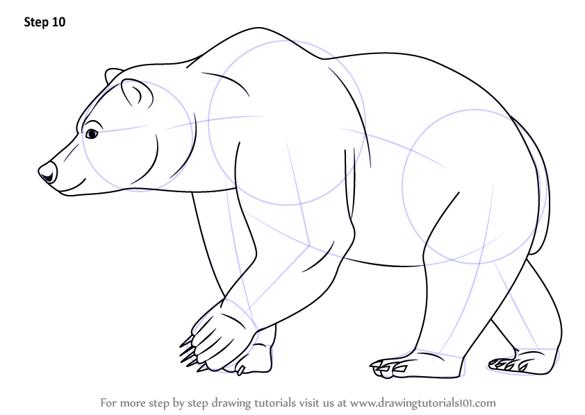 Line Drawings Of Wild Animals : Learn how to draw a brown bear wild animals step by
