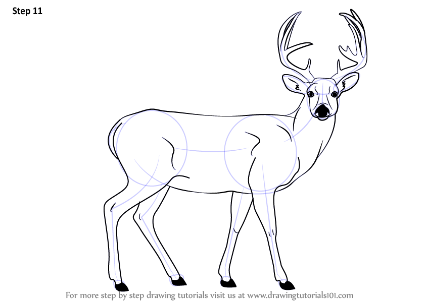 Step By Step How To Draw A Buck Deer DrawingTutorials101