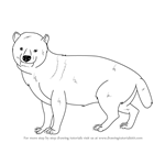 How to Draw a Bush Dog