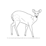 How to Draw a Bushbuck
