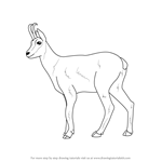How to Draw a Chamois