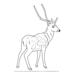 How to Draw a Chital