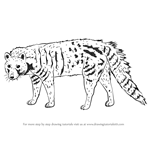 How to Draw a Civet