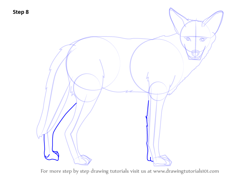 how to draw a coyote howling step by step