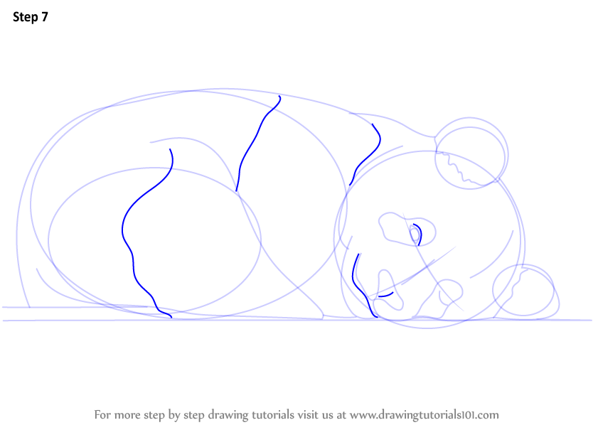 Learn How To Draw A Cute Panda Wild Animals Step By Step