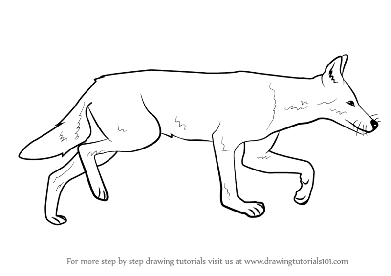 learn how to draw an ethiopian wolf wild animals step by step