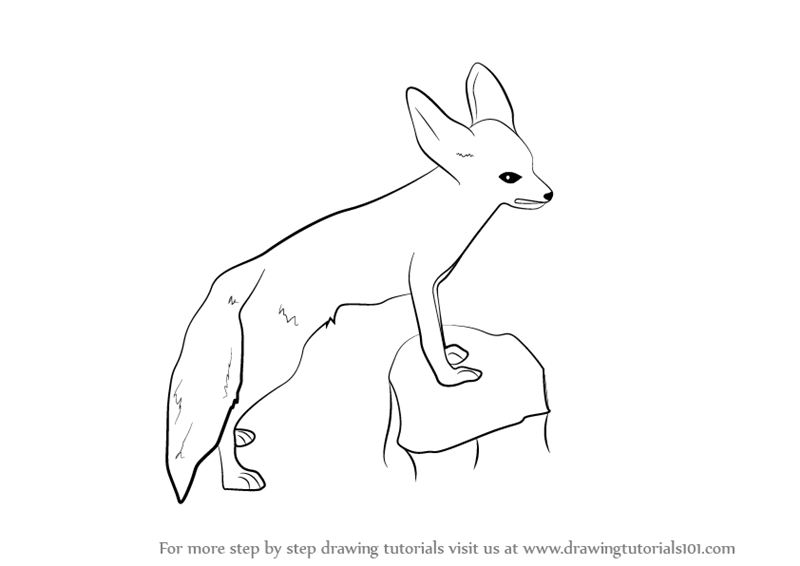 Learn How To Draw A Fennec Fox Wild Animals Step By Step Drawing