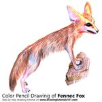 How to Draw a Fennec Fox