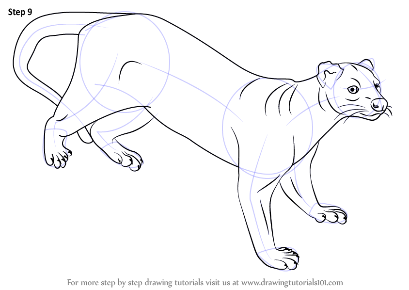 learn how to draw a fossa wild animals step by step drawing tutorials. Black Bedroom Furniture Sets. Home Design Ideas
