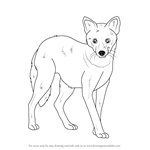 How to Draw a Golden Jackal