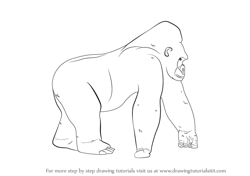 Gorilla Face Line Drawing : Gorilla face drawing for kids