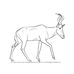 How to Draw a Hartebeest