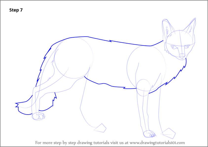 learn how to draw a gray fox wild animals step by step