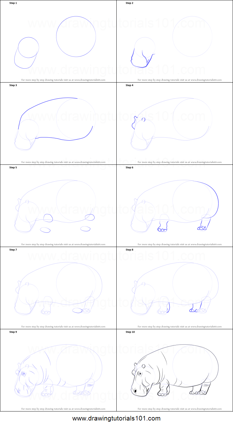 how to draw a hippopotamus printable step by step drawing sheet