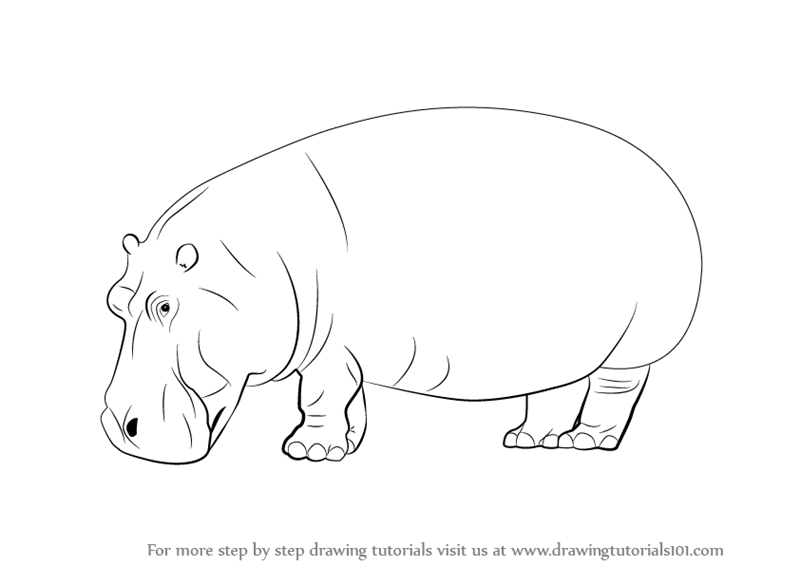 learn how to draw a hippopotamus wild animals step by step