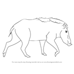 How to Draw a Indian Boar