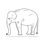 How to Draw an Indian Elephant