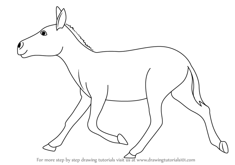 Learn How To Draw A Indian Wild Ass Wild Animals Step By