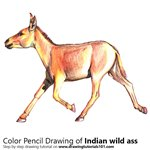 How to Draw a Indian Wild Ass