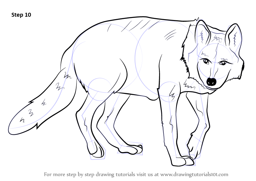 How To Draw A White Wolf Step By Step Anime Animals: Step By Step How To Draw A Mexican Wolf