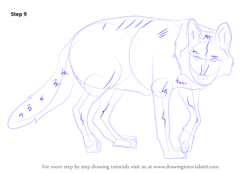 How to draw a wolf body - photo#28