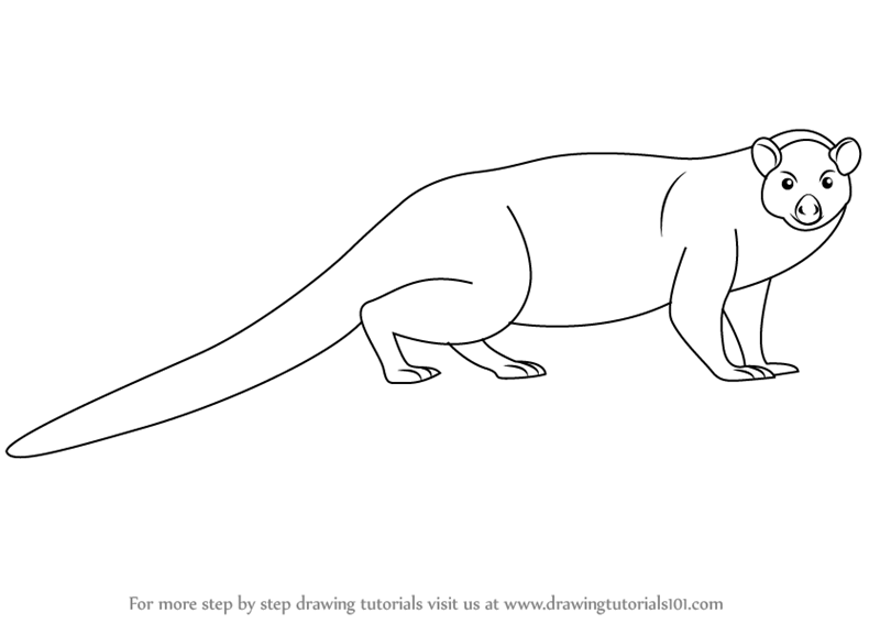Mongoose drawing images galleries for Mongoose coloring page