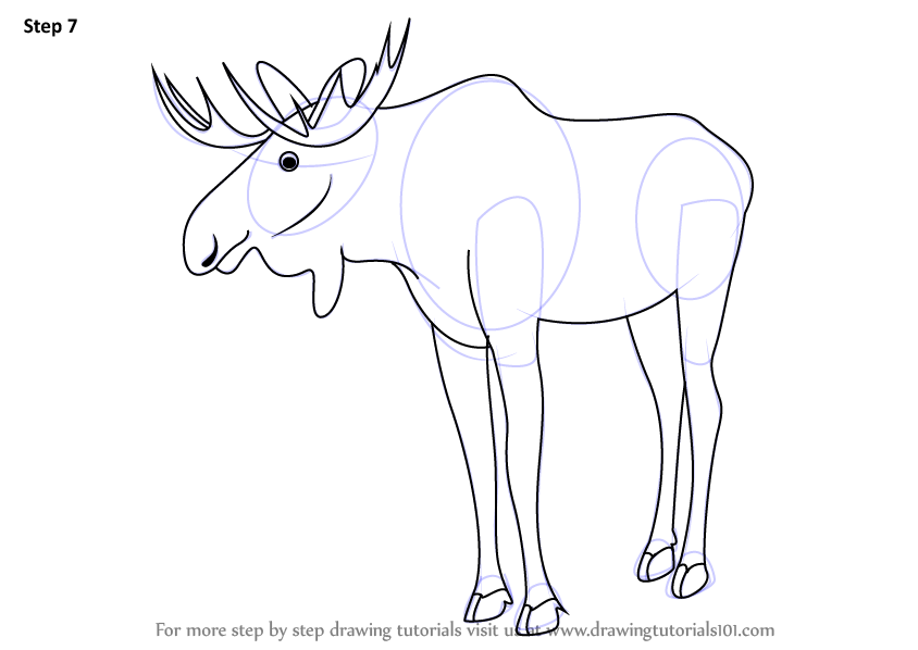 Step by step how to draw a moose for How to draw a moos