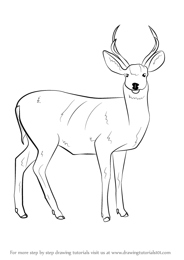 How to draw deer step by step drawing tutorial how to for How to draw a deer step by step