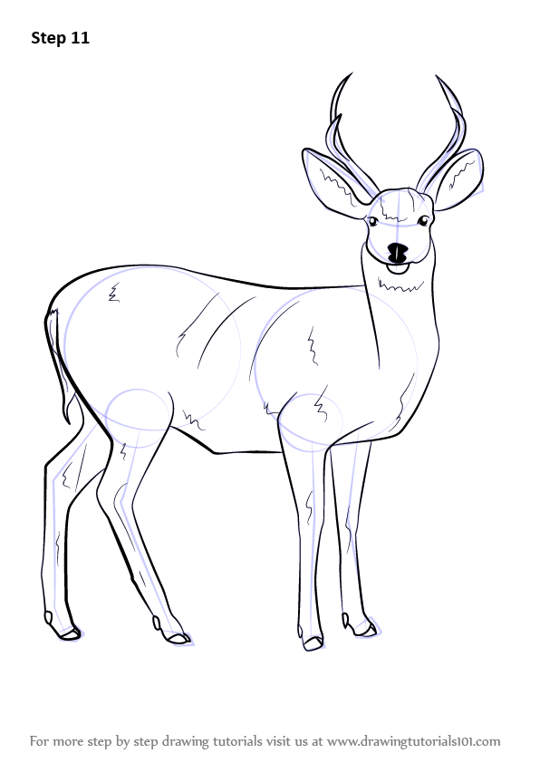 Step By Step How To Draw A Mule Deer Drawingtutorials101 Com