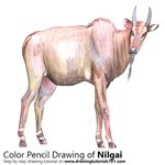 How to Draw a Nilgai