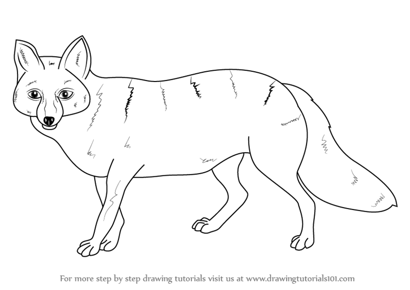 learn how to draw a pampas fox wild animals step by step drawing tutorials