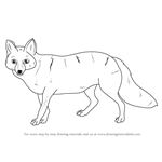 How to Draw a Pampas Fox