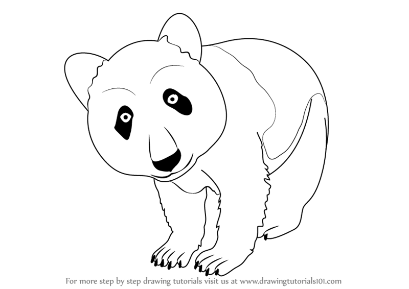 Learn how to draw a panda wild animals step by step drawing tutorials