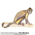 How to Draw a Pin Monkey