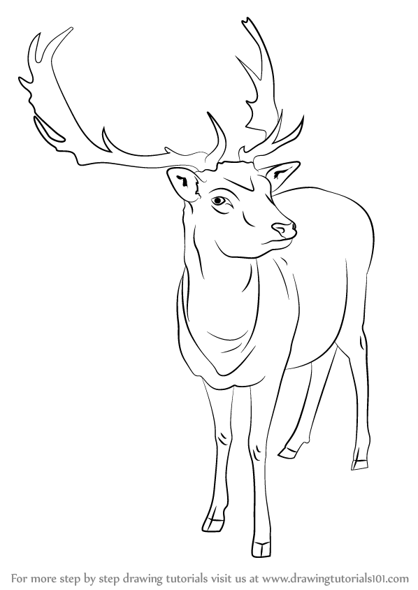 Learn how to draw a reindeer wild animals step by step drawing tutorials