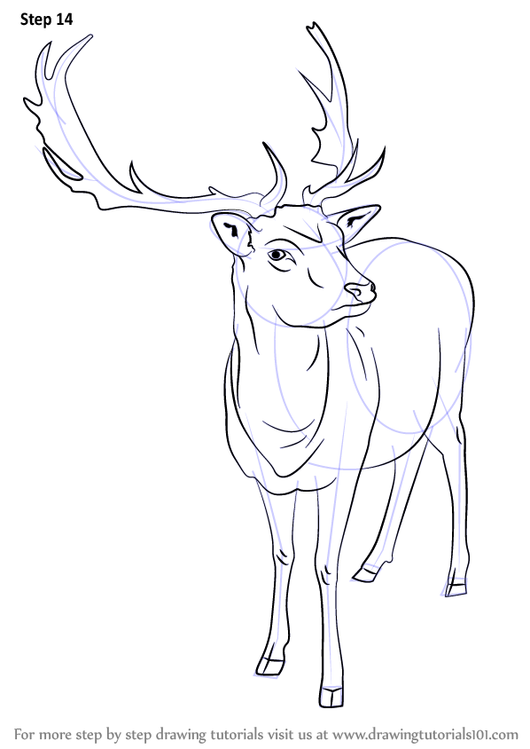 Reindeer Face Line Drawing : Learn how to draw a reindeer wild animals step by